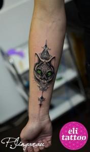 pisica6